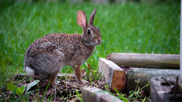 Keep Rabbits Out Of Your Garden Motion Sensor Sprinklers