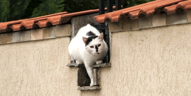 feral cat garden