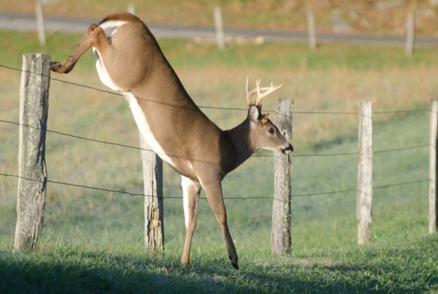 How To Keep Deer Out Of Your Garden Motion Sensor Sprinklers